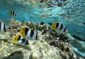 Arii Tahaa Lagoon Tour from Raiatea - Full Day (Motu Lunch included)
