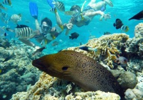 Snorkeling Guided Tour on the East Coast - 02H00