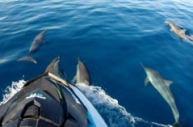 Dolphin Watching by Jet Ski from West Coast - 01H00 / Morning Tour (2Pers Max per Jet)